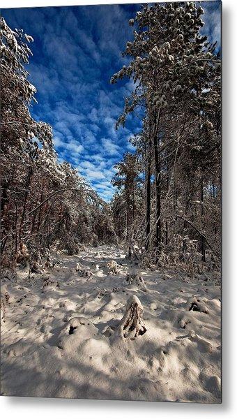 Logging Trail  Metal Print