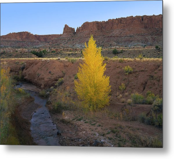 Lone Cottonwood Metal Print