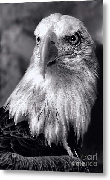 Lone Eagle Metal Print