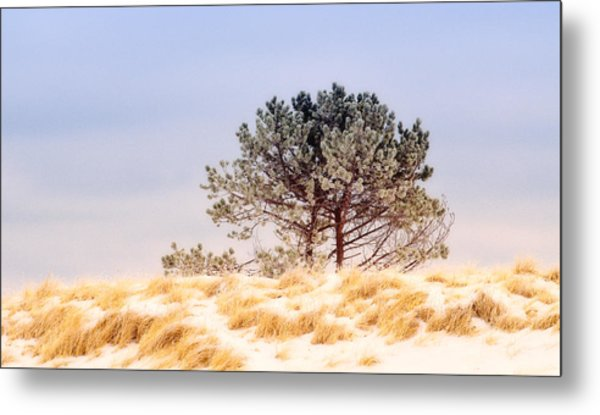Metal Print featuring the photograph Lone Pine by Michael Hubley