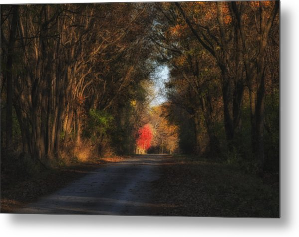 Metal Print featuring the photograph Lone Red Maple by Darlene Bushue