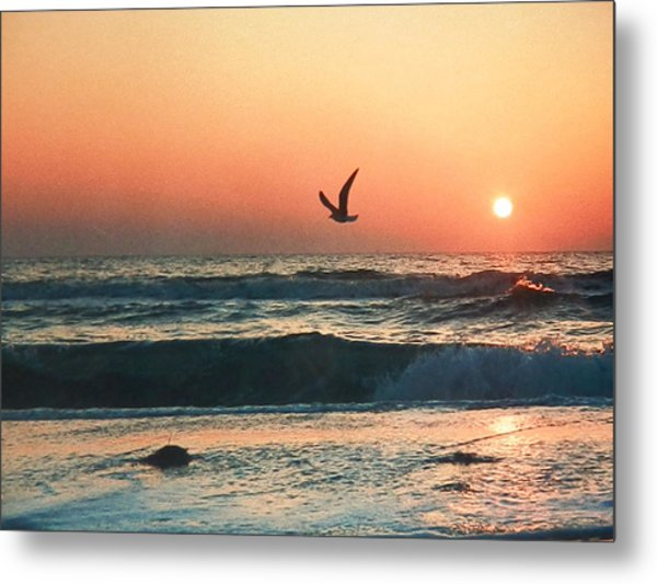 Lone Seagull Sunset Flight Metal Print