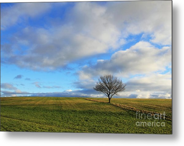 Lone Tree At Epsom Downs Uk Metal Print