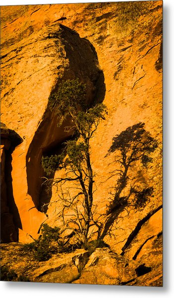 Lone Tree At Landscape Arch Metal Print
