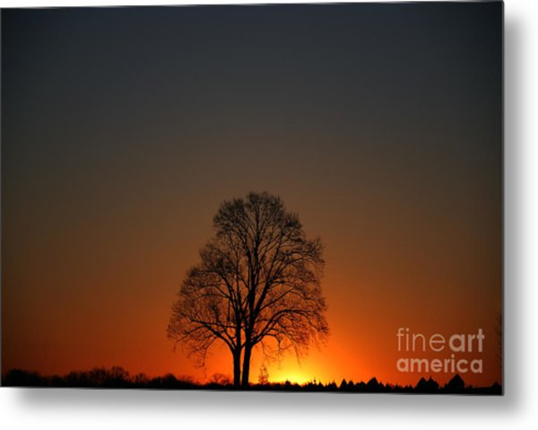 Lone Tree At Sunrise Metal Print