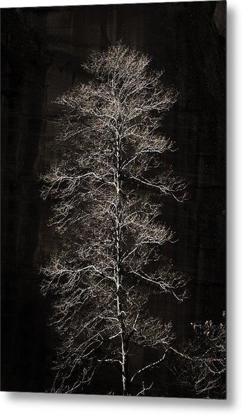 Lone Tree Metal Print