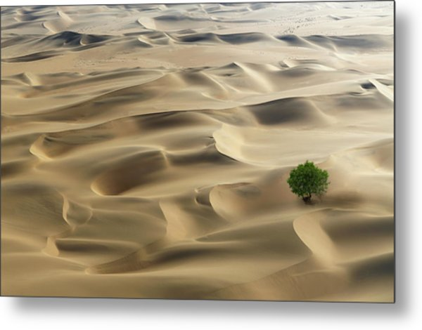 Lone Tree In A Desert Metal Print by Buena Vista Images
