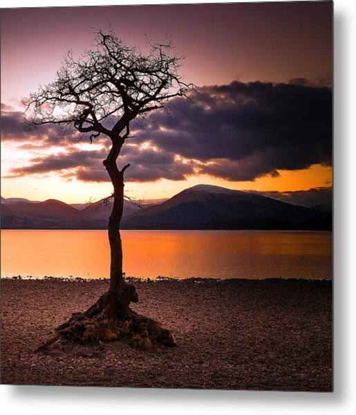 Lone Tree Of Loch Lomond Metal Print