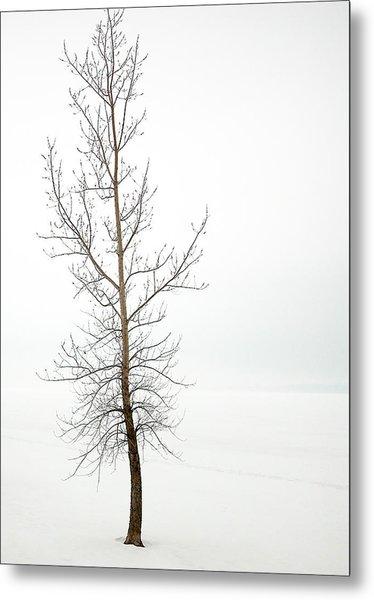 Lone Tree On The Ottawa River Shoreline Metal Print