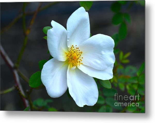 Lonely Blossom... Metal Print