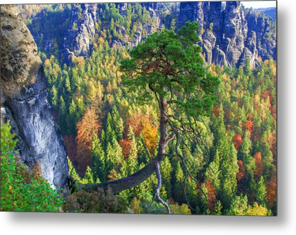 Lonely Tree In The Elbe Sandstone Mountains Metal Print