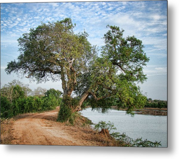 Lonely Tree Metal Print by Sanjeewa Marasinghe