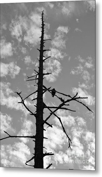 Lonely Vulture Metal Print