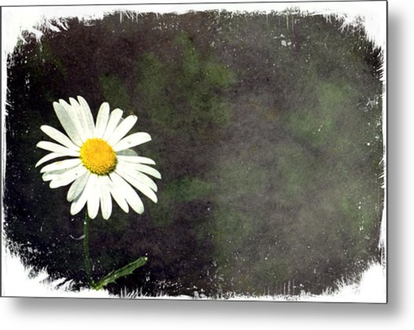 Lonesome Daisy Metal Print