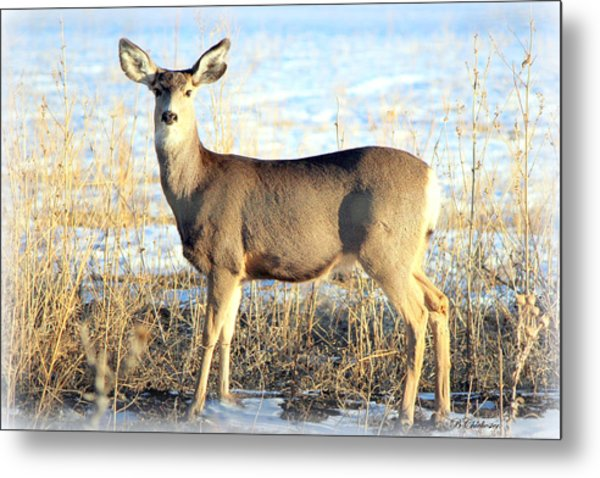 Lonesome Doe Sunset Metal Print