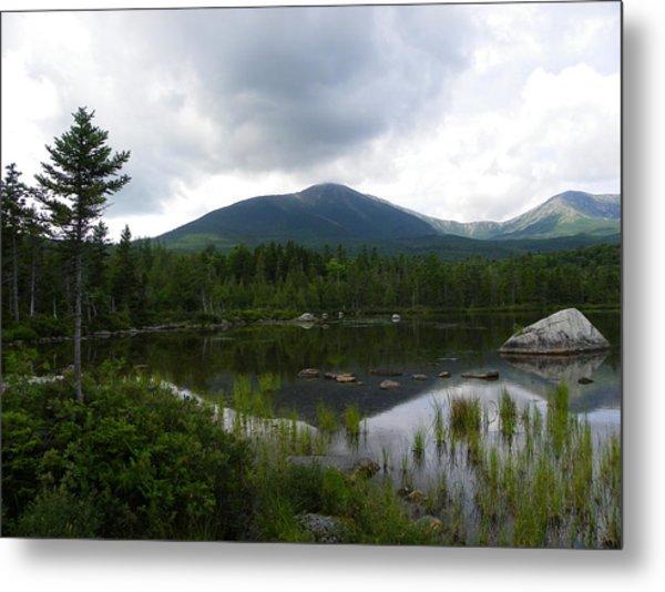 Lonesome Pine At Sandy Stream Pond Metal Print