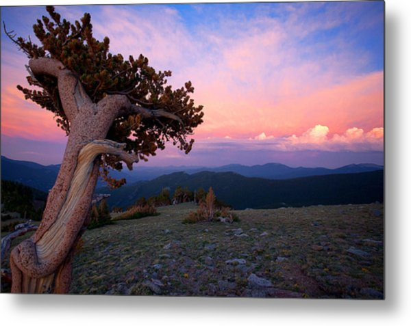 Lonesome Pine Metal Print