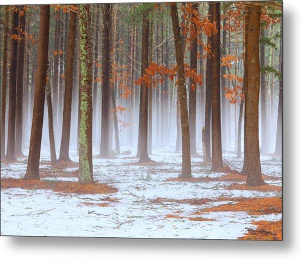 Long Island Pine-oak Forest Metal Print