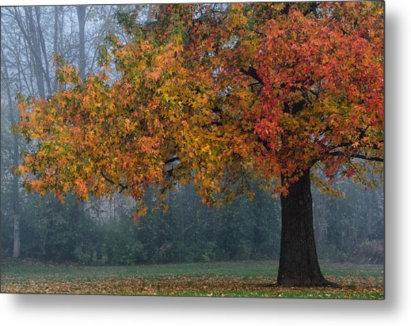 Metal Print featuring the photograph Longing For Autumn by Darlene Bushue