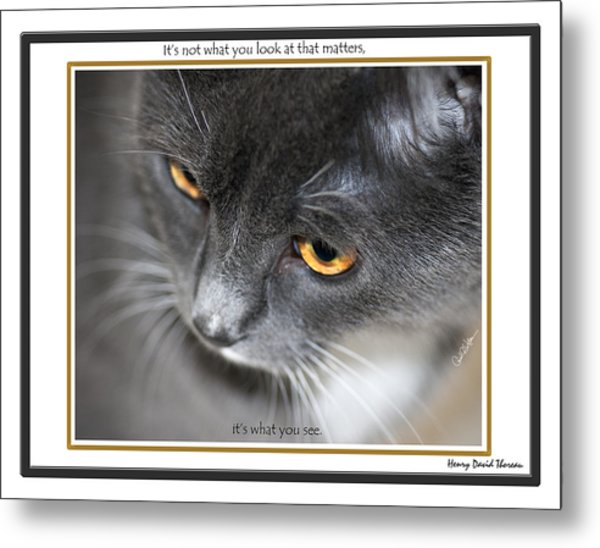 Look And See Metal Print