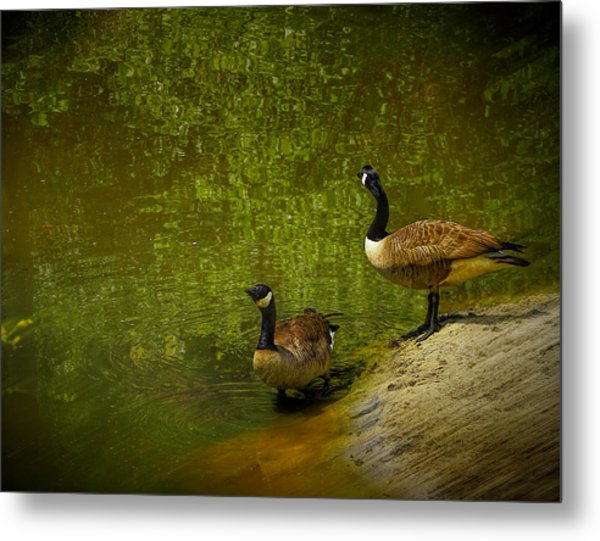 Look Before You Leap Metal Print by Dave Bosse