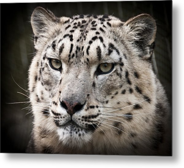 Look Into My Leopard Eyes Metal Print