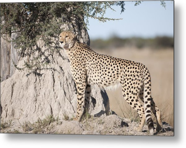 Looking For A Tasty Snack Metal Print