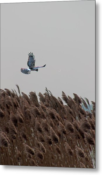 Looking For Lunch Metal Print by Rhonda Humphreys