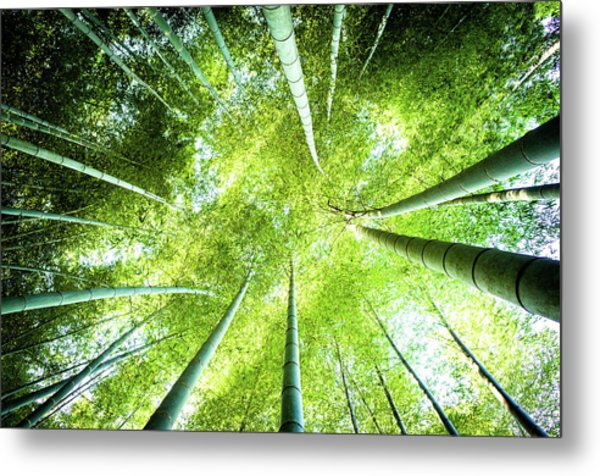Looking Up In The Bamboo Grove Metal Print by Marser