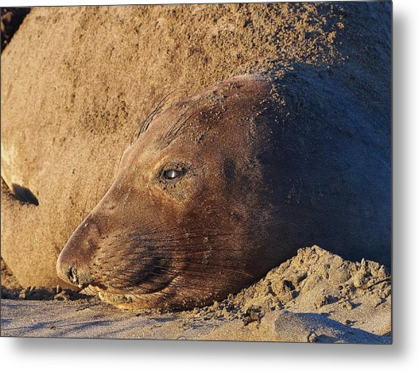 Lost In Thought Metal Print