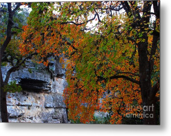 Fall Foliage At Lost Maples State Natural Area  Metal Print