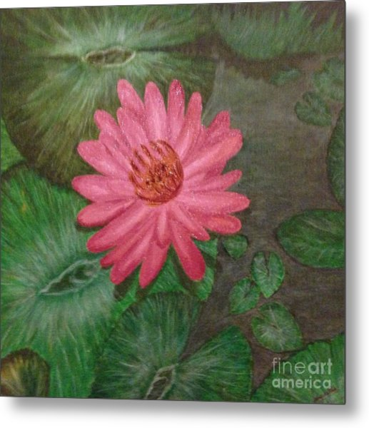 Water Lilly Metal Print by S P