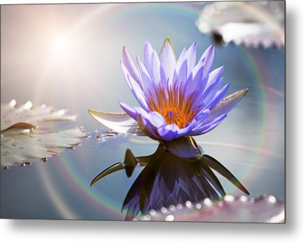 Lotus Flower With Sun Flare Metal Print