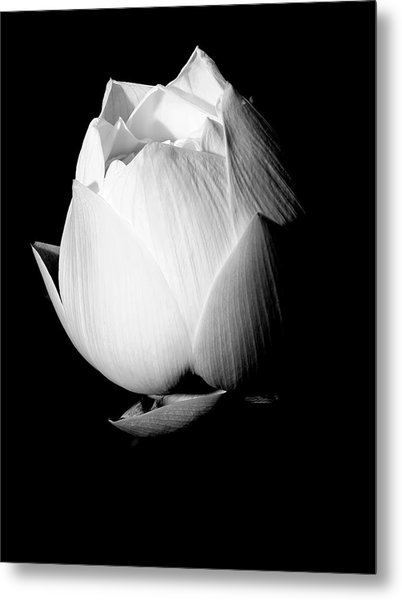 Lotus In Black And White Metal Print