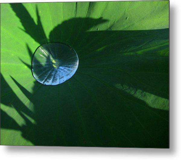 Lotus Leaf With Dew   Metal Print
