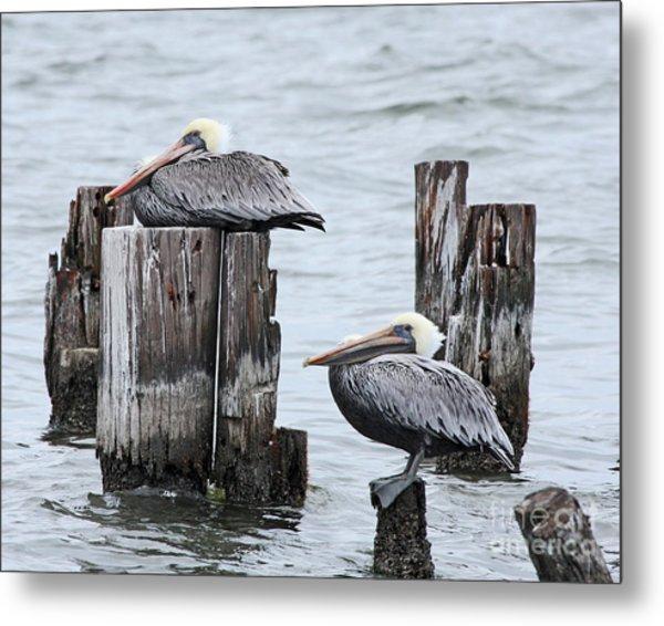 Louisiana Pelicans On Lake Ponchartrain Metal Print