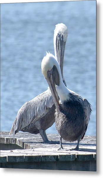 Love At First Site Metal Print by Nancy Edwards