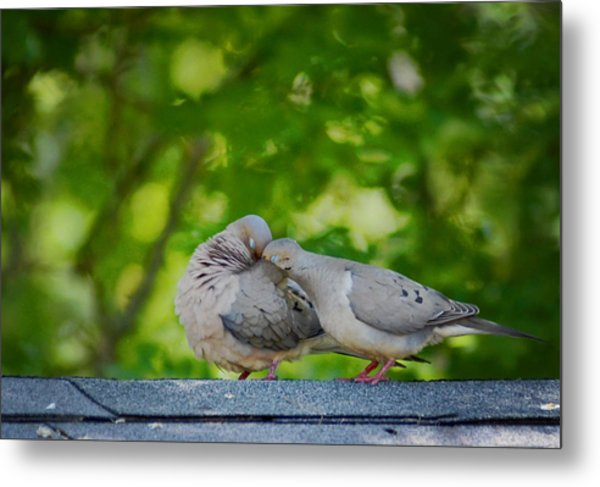Love Doves  Metal Print