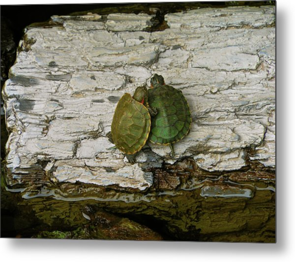 Love In A Shell Metal Print