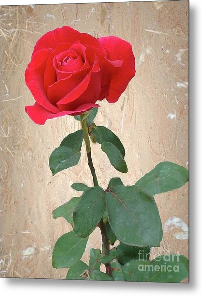 Love Is Like A Red Red Rose Metal Print