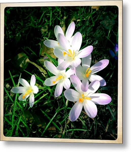 Lovely Flowers In Spring Metal Print