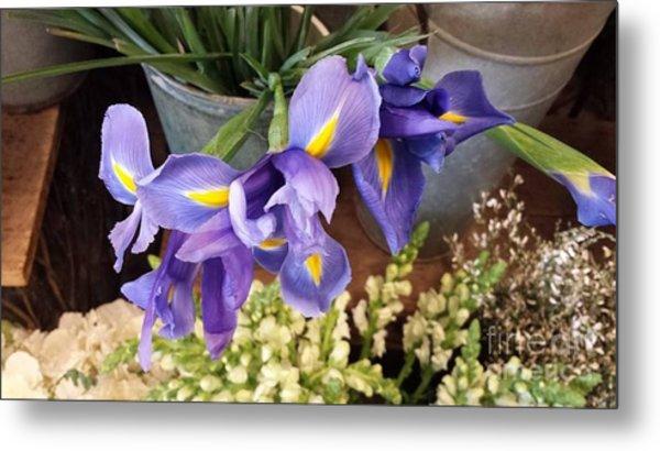 Lovely Purple Irises Metal Print