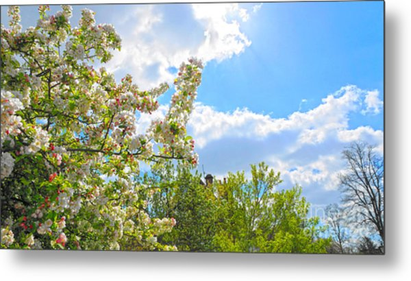 Lovely Spring Blossoms Metal Print