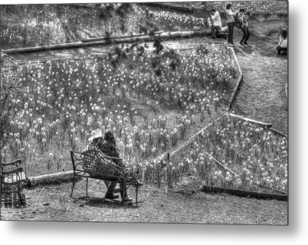 Lovers On Daffodil Hill Metal Print