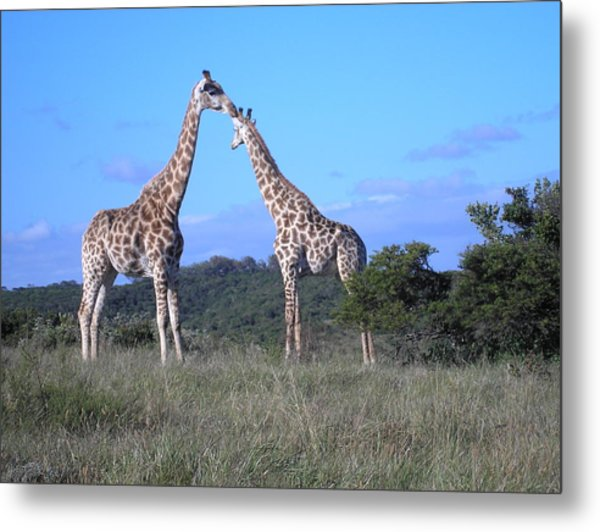 Lovers On Safari Metal Print
