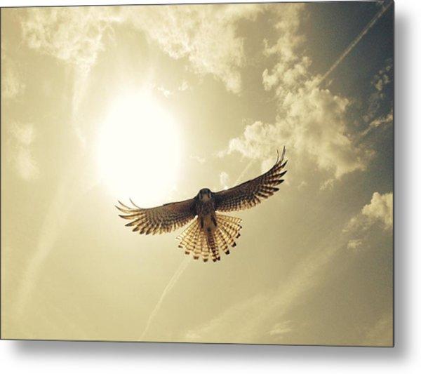 Low Angle View Of Eagle Flying Metal Print by David Hernandez / Eyeem