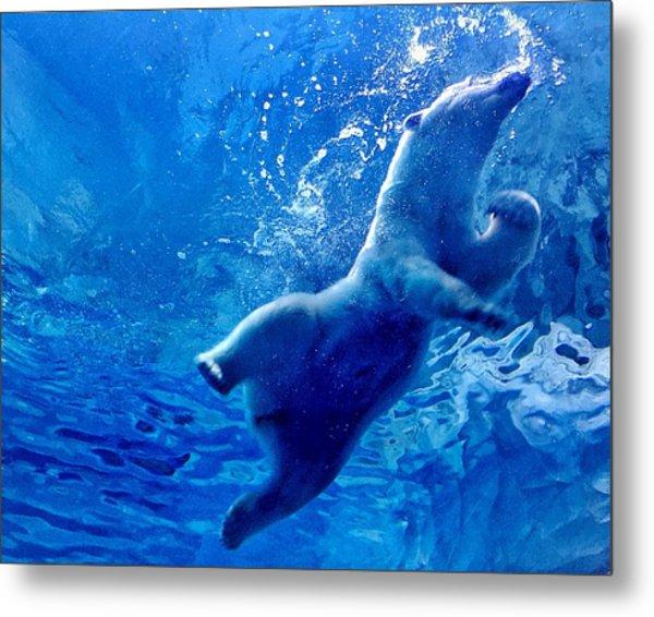 Low Angle View Of Polar Bear Swimming Metal Print