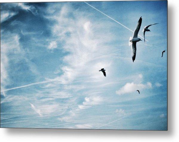 Low Angle View Of Seagulls Flying Metal Print by Mark Mwamba / Eyeem