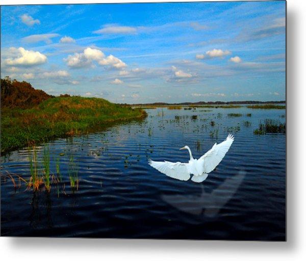 Low Flying Bird Metal Print by Fred Leavitt