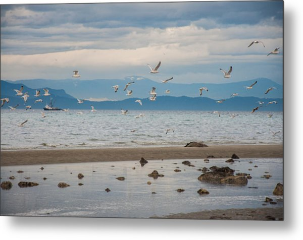 Herring Season  Metal Print